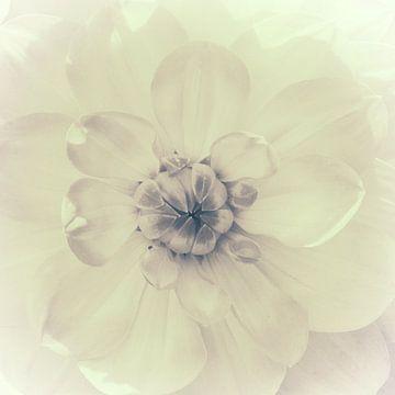 Hart van de dahlia, monochroom van Rietje Bulthuis