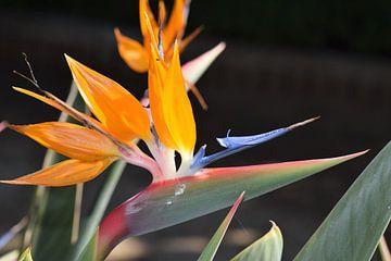 Spaanse bloemenpraal van Lendy Fotografie .