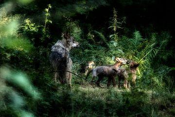 moeder wolf met jong van