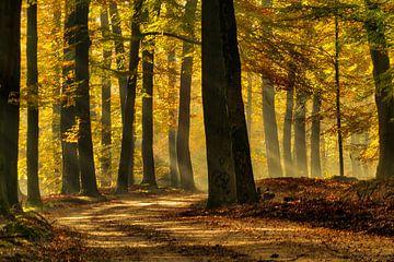 Zonneharpen in herfstbos van Gerrit Kosters