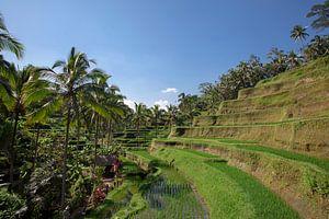 detail van een Tegalalang rijstterras in Ubud, Bali, Indonesië