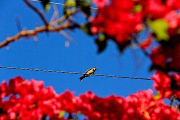 Framed Birdie van Denise Rubino