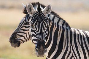 2 gezichten, Etosha Namibië