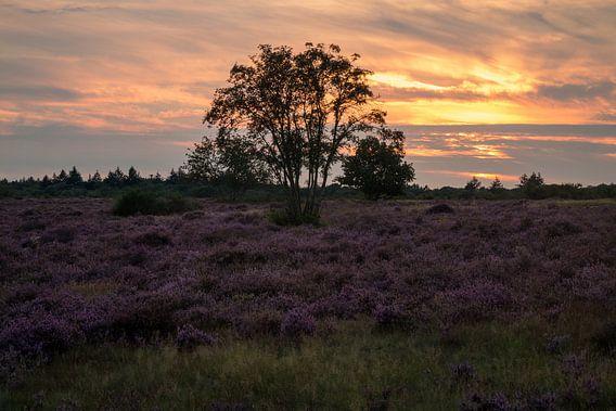 Hoorneboegse Heide - 5