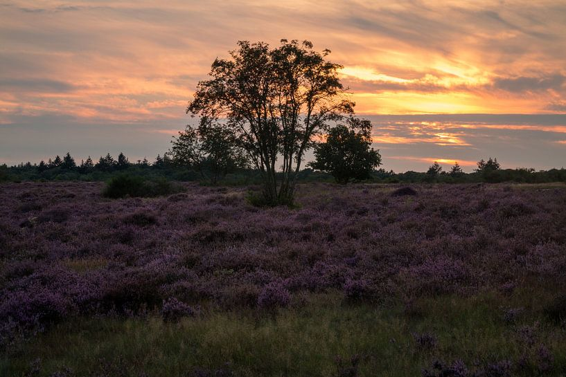 Hoorneboegse Heide - 5 van Nuance Beeld