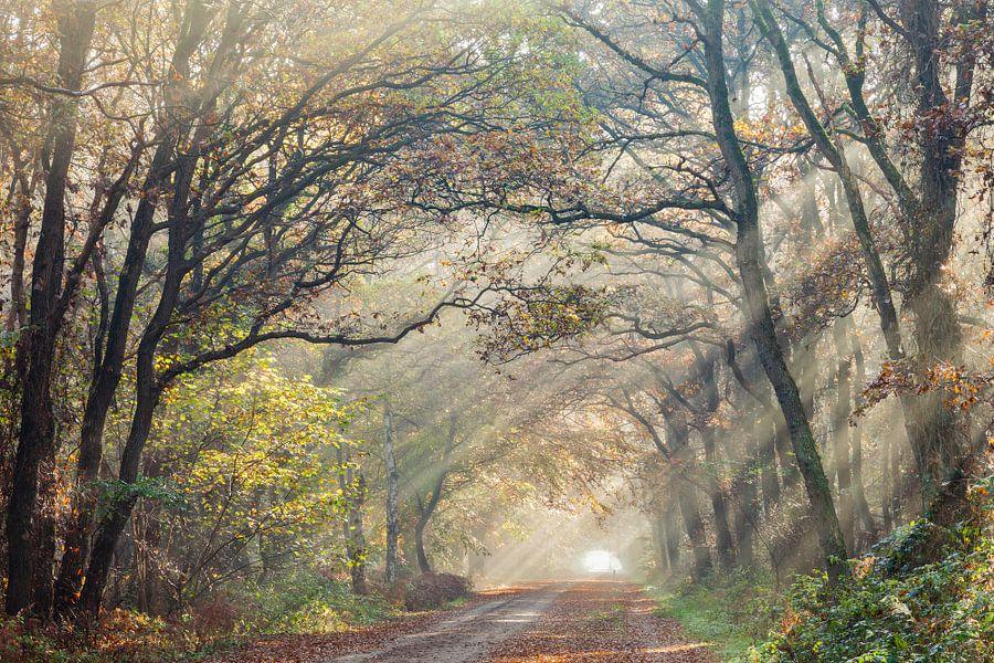 Zonnestralen, spelend met de bomen van Karla Leeftink
