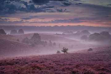 Nebliger Morgen auf der Heide von Dennis Donders