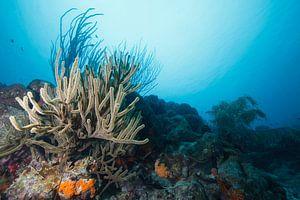 Onderwaterlandschap Bonaire