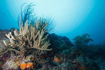 Onderwaterlandschap Bonaire van Vanessa Devolder