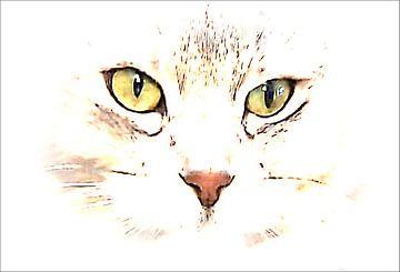 Interessantes Katzengesicht van Margitta Frischat
