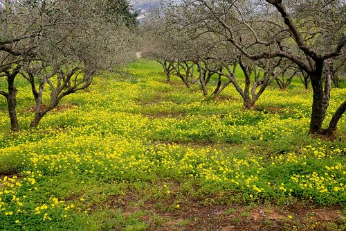 Geel groen voorjaar van Jim van Iterson