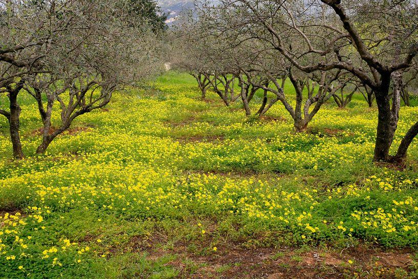 Geel groen voorjaar sur Jim van Iterson
