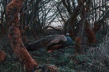 The peacock forest van Elianne van Turennout