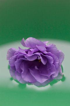 Paarse bloem drijft op water van Tot Kijk Fotografie: natuur aan de muur