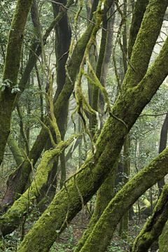 Mystiek bos van Marian Sintemaartensdijk