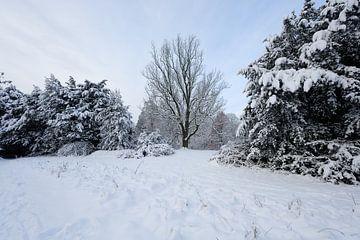 Utrechts landgoed Sandwijck in de winter von Merijn van der Vliet
