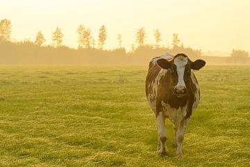 Koe in de wei tijdens een mistige zonsopgang in de IJsseldelta van Sjoerd van der Wal