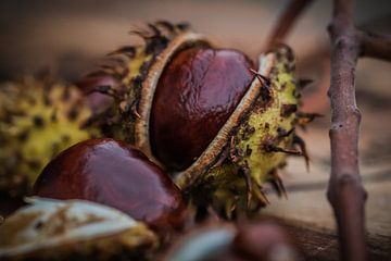Herfst -kastanjes- 1 van Marianne Twijnstra-Gerrits