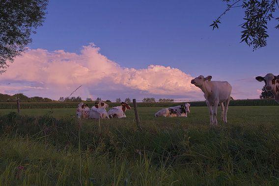 Buienluchten met koeien op de voorgrond