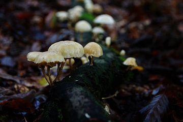 Op een kleine paddenstoel van Marije Zwart