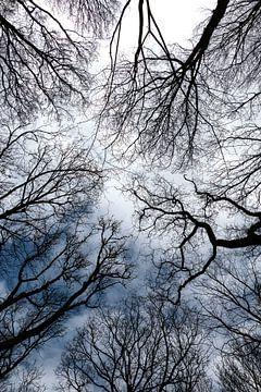 Sieh nach oben. von Yvonne Gravestein
