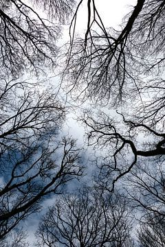 Kijk omhoog. van Yvonne Gravestein