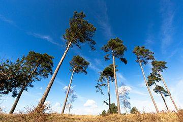 Des arbres mais différents sur Roel Bergsma