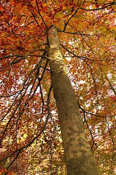 Baum in Herbstfarben | Baum im Herbst von Art_Pics_Lotte | Lotte Photo&Design