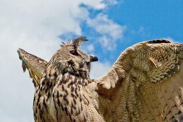Owl, reaching for the sky van Harry van den Brink