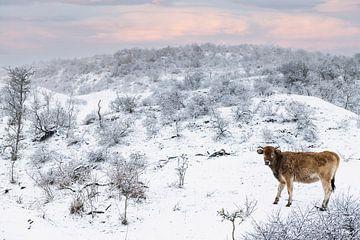 Wild kalf in sneeuwlandschap