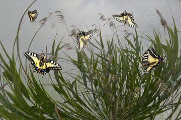 Vlinders in het riet van Christine Nöhmeier
