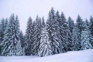 Winterbomen van Thomas Heitz