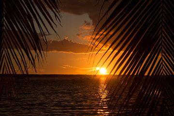 Zonsondergang tussen de palmbomen von Michèle Huge