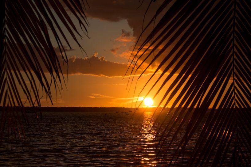 Zonsondergang tussen de palmbomen van Michèle Huge