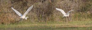 Flying The Okavango