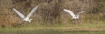 Flying The Okavango sur BL Photography