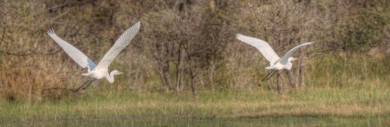 Flying The Okavango van BL Photography