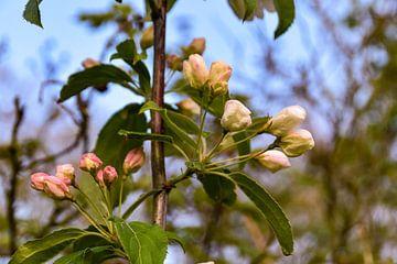 Obstbaum von Hermineke Pijls