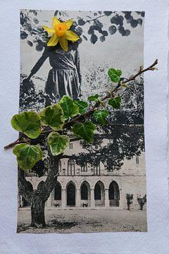 Mauerblümchen von Karin vanBijleveltFotografie