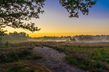 Vormittag auf dem Moor von Stephan Krabbendam