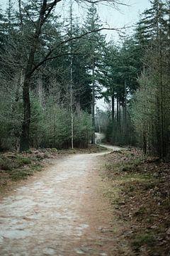 Mysterieus pad in het groene winterse Veluwsche bos | Nederland | Natuur- & Landschapsfotografie van Diana van Neck Photography