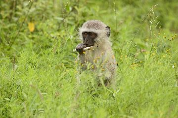 southafrica ... my tasty sugar cane! van Meleah Fotografie