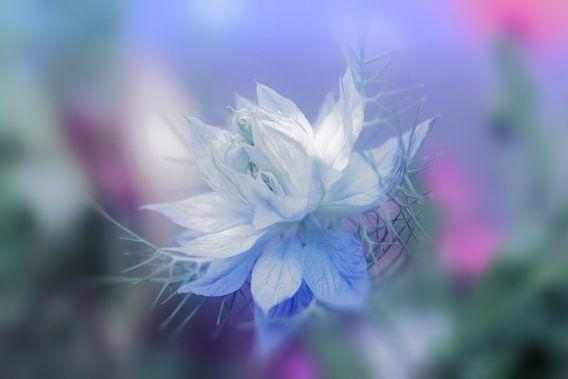 blue Dream van Dagmar Marina