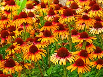 Sonnenblume (Echinacea) von Caroline Lichthart