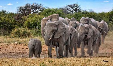 Elefantenherde, Etosha Namibia