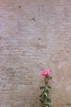 Roze roos van Anouschka Hendriks
