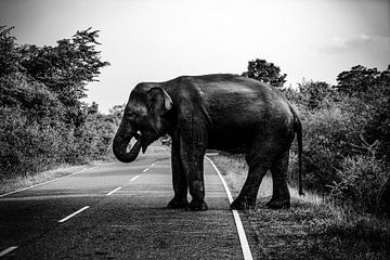 Elefant von Fotoverliebt - Julia Schiffers