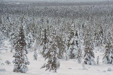 landschap vol bomen onder de sneeuw van Robin van Maanen
