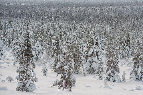 landschap vol bomen onder de sneeuw