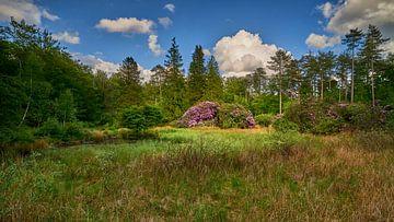 Rododendrons in boslandschap van Jenco van Zalk